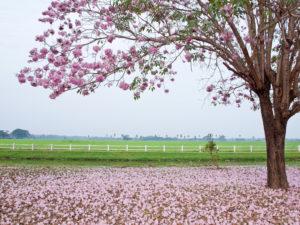 primavera-foto-gallery-02