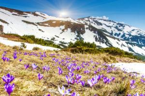 primavera-foto-gallery-03