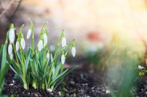 primavera-foto-gallery-05