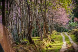 primavera-foto-gallery-06