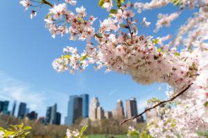 primavera-foto-gallery-08